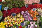 Thumbnail Cut flowers, Floating Flower Market, Singel Canal, Amsterdam, Netherlands, Europe