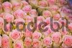 Thumbnail Bouquet of roses, Floating Flower Market, Singel Canal, Amsterdam, Netherlands, Europe