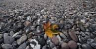 Thumbnail leaf on the beach