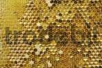 Thumbnail Wax honeycomb with pollen in the cells