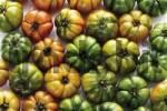 Thumbnail Oxheart Tomatoes