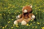 Thumbnail Teddy bear sitting in a flower meadow