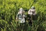 Thumbnail Gardener, farmer, gardeners wife, farmers wife figurines in a wheat field