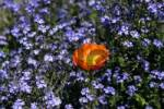 Thumbnail Flower meadow