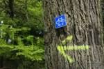Thumbnail Sign for a mountain bike stretch in the forest