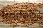 Thumbnail Fermented and dried cocoa beans Theobroma cacao, Ghana, West Africa