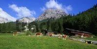 Thumbnail Stallen alpine pasture, Hahnkampl und Rauher Knoell Mountains, Stallen valley, Karwendel Range, Tyrol, Austria, Europe
