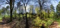 Thumbnail Panoramic view of a bright mixed forest in spring