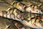 Thumbnail fish market