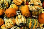 Thumbnail pumpkins