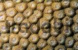 Thumbnail corals