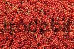 Thumbnail redcurrants
