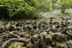 Thumbnail Sea of Basalt Blocks in virgin forest, Loesershag bei Oberbach, Wildflecken, Schwarze Berge, Rhoen, Lower Franconia, Bavaria, Germany, Europe