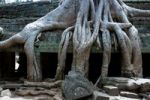 Thumbnail Tree roots on ruins in the Ta Prohm Temple, Siem Reap, Cambodia, Southeast Asia