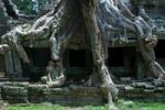 Thumbnail Tree roots on the Preah Khan Temple, Siem Reap, Cambodia, Southeast Asia