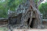Thumbnail Root system on the entrance tower to the Ta Som Temple, Siem Reap, Cambodia, Southeast Asia