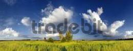 Thumbnail Panoramic view of meadows and some trees, cloudy sky near Adelsschlag, Bavaria, Germany, Europe