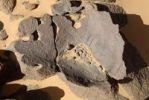 Thumbnail Manganese crust on sandstone, geology, Tassili du Hoggar, Wilaya Tamanrasset, Algeria, Sahara, Africa