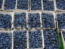 Thumbnail Many bowls of bilberries on the market