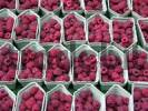 Thumbnail Many bowls of raspberries on the market