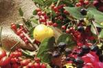 Thumbnail Autumn fruit, Quince, Rose hips, Rowan berries and St. Johns worts