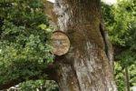 Thumbnail Kings oak, thousand-year old oak in the Kurpark Bad Brueckenau, Rhoen, Lower Franconia, Bavaria, Germany, Europe