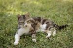Thumbnail Kitten lying on the lawn