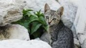 Thumbnail Kitten sitting in front of white rocks, Greece, Europe