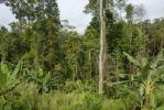 Thumbnail Remains of a jungle near Boun Tai, Phongsali Province, Laos, Southeast Asia