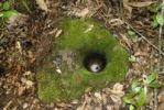 Thumbnail Old grindstone covered with moss and a water hole in the jungle near Boun Tai, Phongsali Province, Laos, Southeast Asia