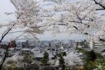 Thumbnail View through cherry blossomtowards the city of Kyoto, Japan, Asia