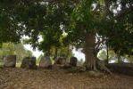 Thumbnail Stone jugs under a tree, Plain of Jars site No. 2, Hai Hin Phu Salato, Xieng Khuang Province, Laos, Southeast Asia