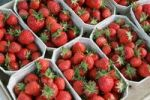 Thumbnail Strawberries for sale at a strawberry stall near Heidelberg, Baden-Wuerttemberg, Germany, Europe