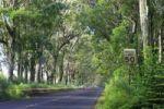 Thumbnail Cars driving through the mahogany trees along Tunnel Road, Route 520, Maluhia Road, Kauai Island, Hawaii, USA