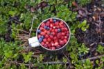 Thumbnail Wild berries in a cup on the forest floor, Hiiumaa, Baltic Sea island, Estonia, Baltic States, Northeast Europe