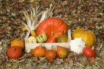 Thumbnail Pumpkins and corn on the cobs in a wooden box on straw, autumn leaves