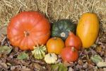 Thumbnail Colourful Cucurbitas Cucurbita on autumn leaves and straw