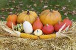 Thumbnail Colourful Cucurbitas Cucurbita and corn on the cobs on straw