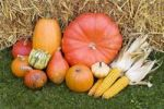 Thumbnail Colourful Cucurbitas Cucurbita and corn on the cobs with straw