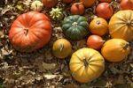 Thumbnail Colourful Cucurbitas Cucurbita on autumn leaves