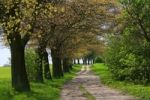 Thumbnail Avenue of trees along a path, Mecklenburg Lake District, Mecklenburg-Western Pomerania, Germany, Europe