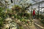 Thumbnail Succulent house botanical garden