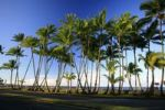 Thumbnail Sea front with palm trees, Hilo, Big Island, Hawaii, Hawaii, USA