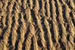 Thumbnail Sand structure in the dunes of Mungo National Park, New South Wales, Australia