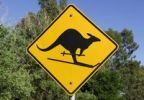 Thumbnail Kangaroo on skis, traffic sign, signpost, altered by a prankster, Bendigo, Victoria, Australia