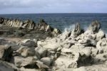 Thumbnail Dragons Teeth Formation, Maui, Hawaii, Hawaii, USA