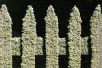 Thumbnail Wooden garden fence, detail, overgrown with lichen, Port Arthur, Tasmania, Australia