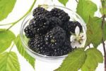 Thumbnail Fresh blackberries and flower