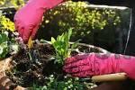 Thumbnail planting a fresh plant
