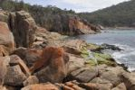 Thumbnail Red granite rocks in Sleepy Bay partially covered by lichen, Freycinet Peninsula, Tasmania, Australia